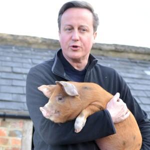 david cameron with pig